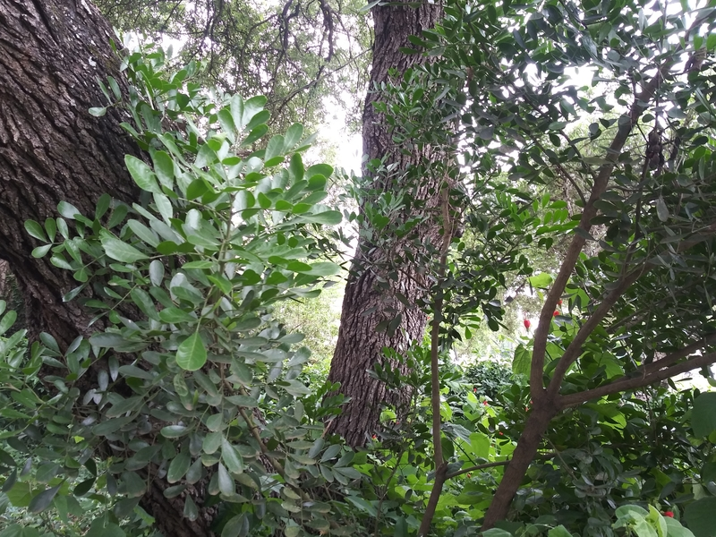 Soil Health to Prevent Trees from Toppling