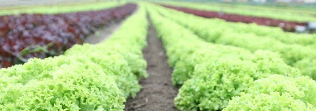 Food Policy Council of San Antonio March Meeting Will be Hosted Virtually this Wednesday